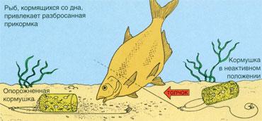 Как сделать кормушки для ловли рыбы